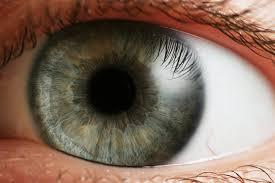 Szemvidítófű az egészséges szemekért