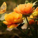Különleges, gyönyörű virágok